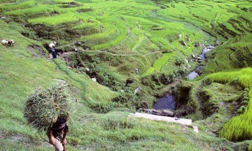 Sikkim Lepcha