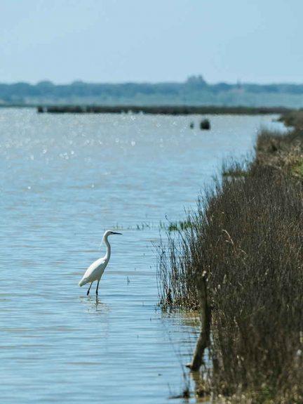 uccelli palude riserva diaccia botrona