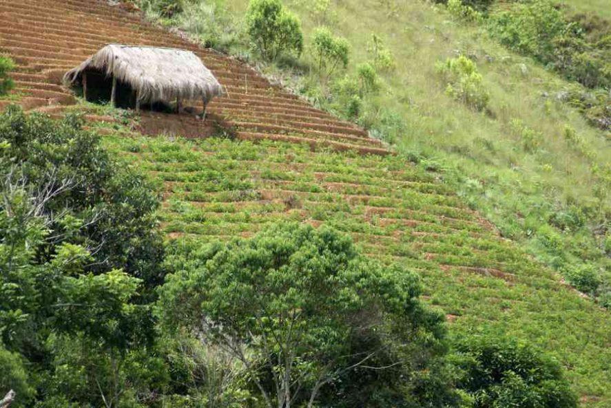 bolivia yungas