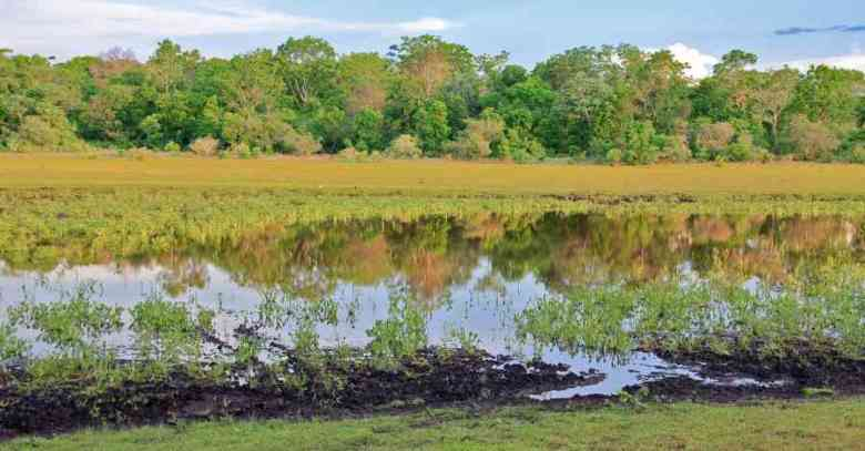amazzonia laguna