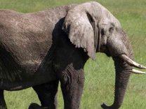 congo parchi nazionali elefanti