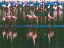 kenya parco nazionale fenicotteri
