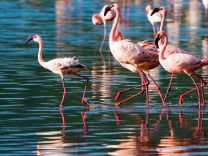 congo parco nazionale lago flamingo