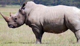 kenya parco nazionale rinoceronte
