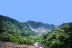 costarica jungle
