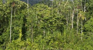 Amazzonia foresta