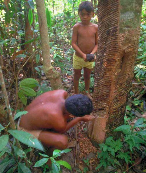 Siringueros del Brasile