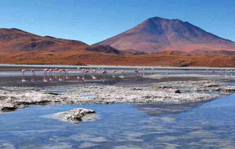 bolivia laguna fenicotteri