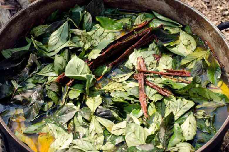 Photo of Ayahuasca