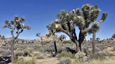 Photo of Joshua Tree national park