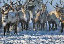 Photo of Northwest Territories