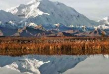 Photo of Fairbanks e Parco Denali