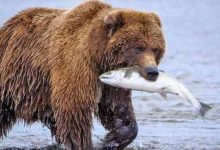 Photo of Katmai e Kodiak